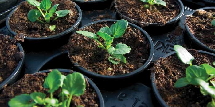 Fertilizers for Commercial growing